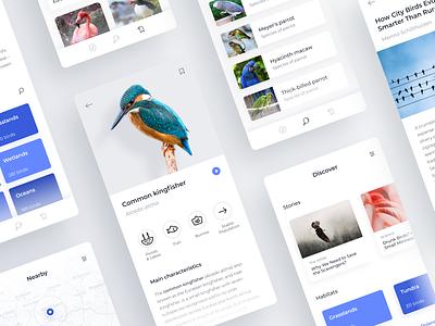 Bird Atlas App encyclopedia mobile discover about animal bird minimal app ux interface ui