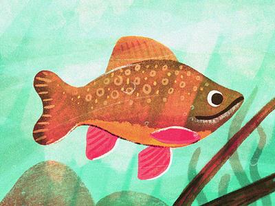 little brookie digital painting texture painting drawing procreate nature fish illustration