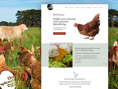 Website Design | The Splendid Egg website design