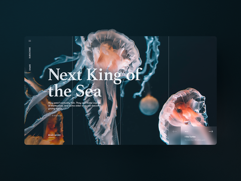 Next King of the Sea – Story Page ocean sea fish jelly fish jellyfish orange blue color blur article page article blog grid webdesign story telling storytelling story page storypage websites website