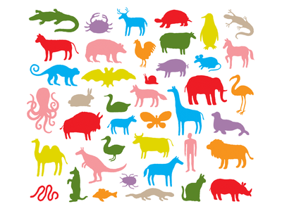 ANIMALES species nature humans zoo illustration illustrator animal illustration pattern animals animales