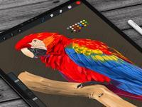 Parrot Digital Sketch Practice