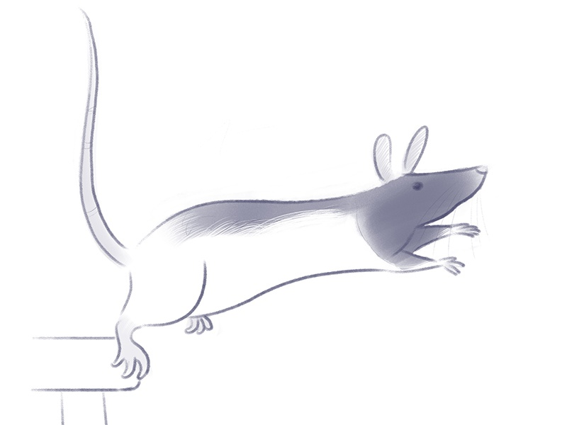 JUMP! drawing rodent rat illustration sketch