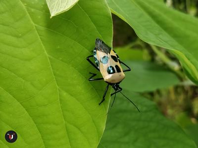 Man Faced Bug Photography