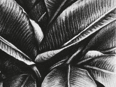 Dark Leaves process nature detail tropical black  white palms leaves sketch drawing