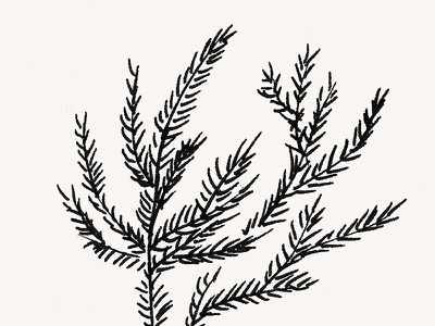 Summer Coral Fern black pink nature leaves pine ink ocean coral fern summer painting illustration