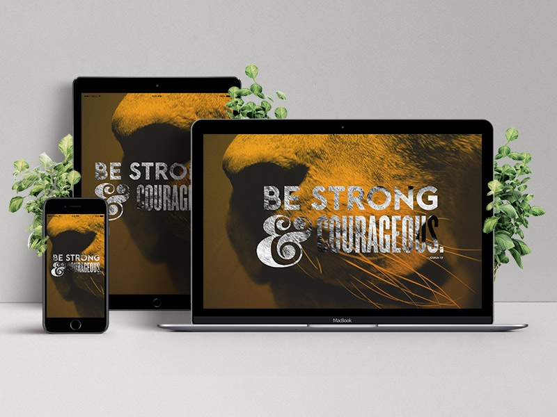 Web Showcase Project Presentation bible verse lion wallpaper