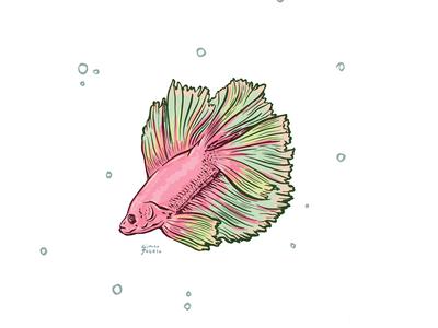 betafish