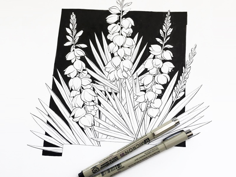 New Mexico in Bloom (WIP) state black and white illustration drawing inking pen and ink yucca state flower flowers new mexico