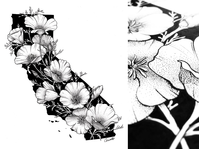 California In Bloom stippling pen and ink drawing illustration los angeles san francisco map floral flowers golden poppy golden state california