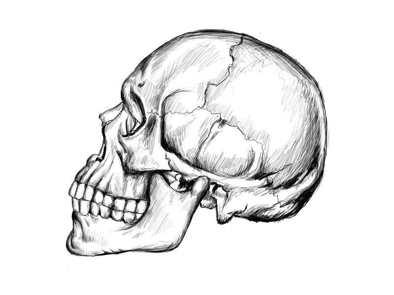 Skull wacom sketch - 1 hour tablet crosshatch cross hatch illustration speed drawing wacom sketch skull drawing