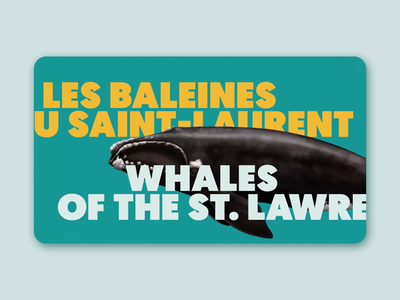 Whales of the St. lawrence animation animal typo motion design whales