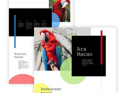 Ara Macao Landing bird contrast blue red ui landing parrot ara