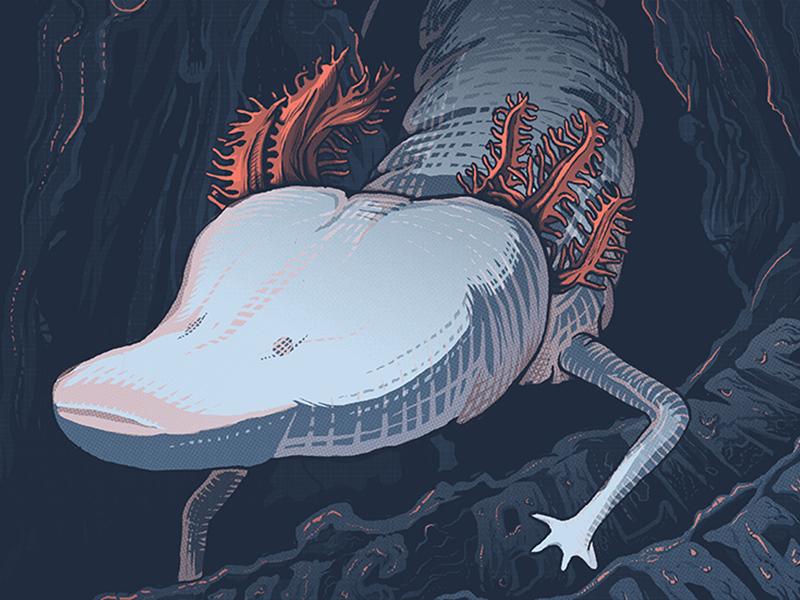 Type Hike illustration conservation salamander poster