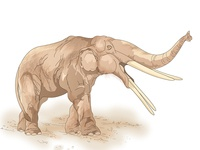Extinct Gomphothere