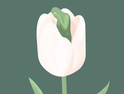 Dear Tulips