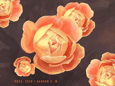 Rose artist procreate 2020 picture design illustration art rose
