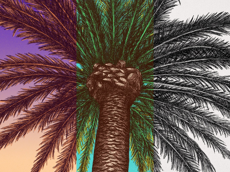 Palm Tree Color Series blackandwhite daylight sunset tree palm tree palm leaves hand drawing color series series drawing photoshop line art pen ink illustration