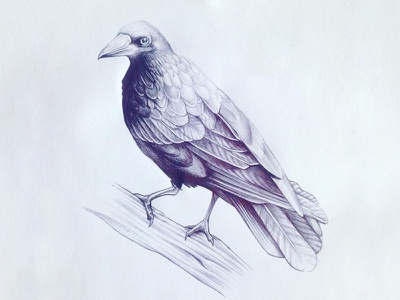 Bird pen bic bird
