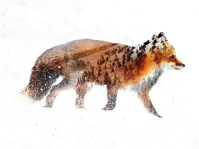 Double Exposure Fox mountain woods design graphic design snow fox double exposure