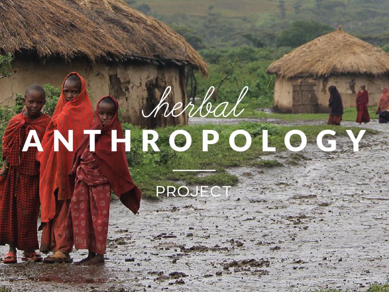 Herbal Anthro Project logo design branding identity concept mark modern
