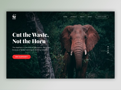 Saving Animals Campaign Site (Elephant) homepage hippo whale action horn save clean apes protect saving landing page campaign website lion tigers leopards rhino wildlife animals elephant