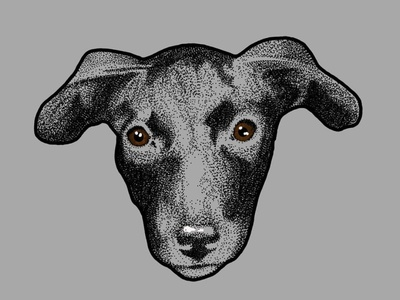 Puppy Django