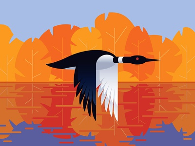 Loon leaves trees lake bird autumn loon