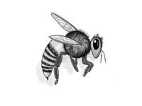 Bumbee Bee