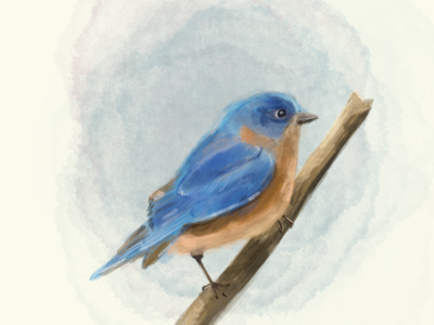 Bluebird procreate illustration art illustration wildlife art wildlife birds bird bluebird