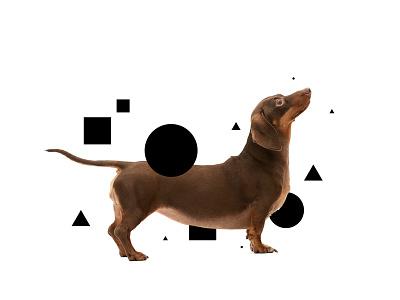 Modern Indie brand doxie dachshund
