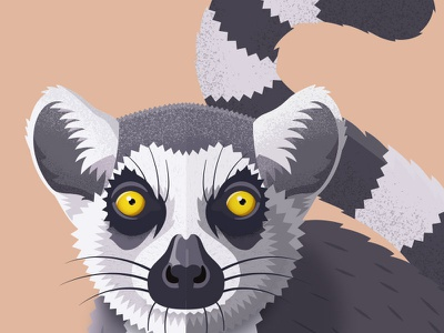Lemur primate animal ring tailed lemur lemur design vector illustration illustrator