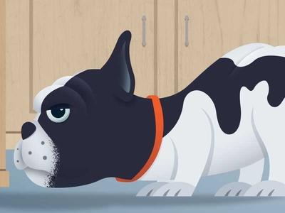 French Bulldog animal dog french bulldog design vector illustration illustrator