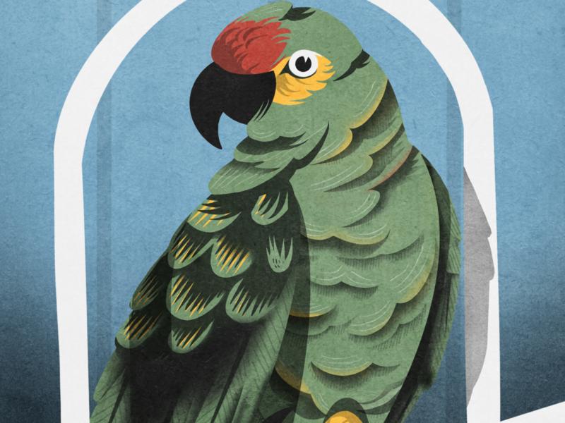 EL Cottoro - The Parrot loteria procreate art game art mexican bird illustration birds parrots parrot mexico procreate illustrator hand drawn illustration