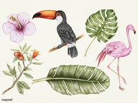 Exotic Plants and Birds