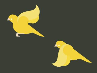Birdseverywhere