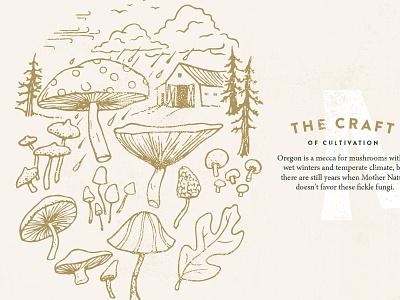 MF Mushroom Illustrations food drawing illustration