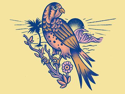 American kestrel SoCal procreate illustration