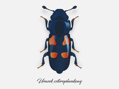 Glischrochilus quadripunctatus bug illustrator illustration beetle