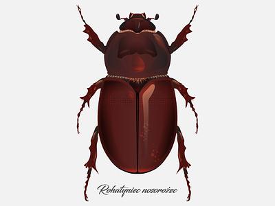 Oryctes nasicornis illustration illustrator vector bug