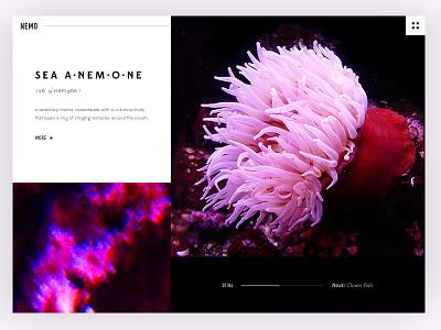 Finding Anemones website web ux typography minimal hero landing design marine ocean sea clean