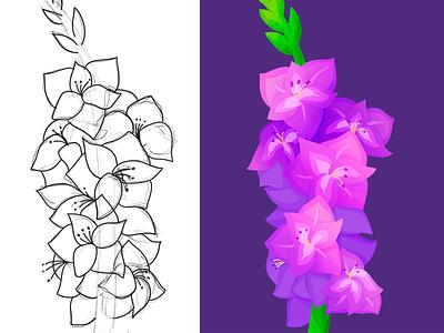 Gladiolas sketch procreate illustration flower gladiolas