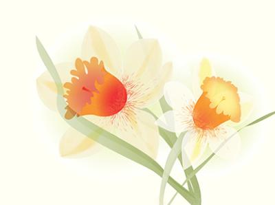 I like daffodil
