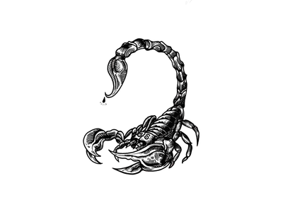 Scorpion design blackwork ink draw illustration black