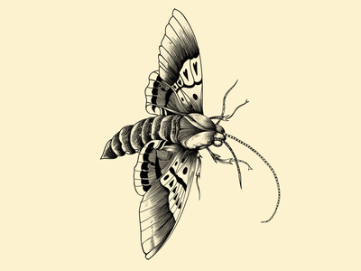 Bug insecto linework ipad pro insect etching blackwork design bug