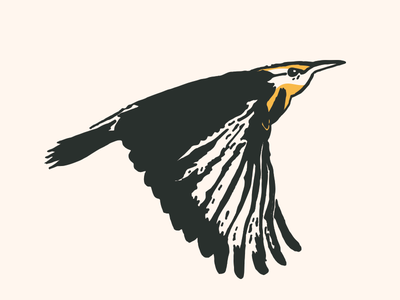 Meadowlark Illustration vector drawing illustration state bird nebraska meadowlark