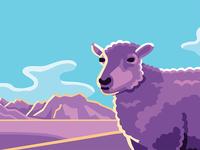 Buckley Pet: Lamb