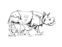 Pencil Drawing  — Rhinos