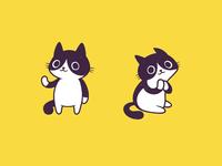 Pied Cat