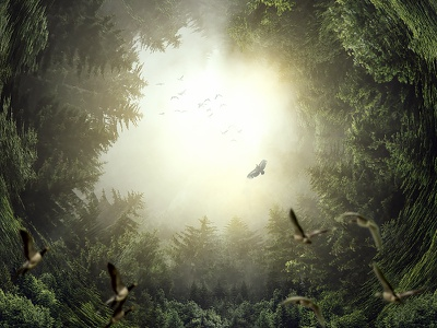 Escape photomanipulation photoshop abstract forestry trees graphicdesign digitalart design nature